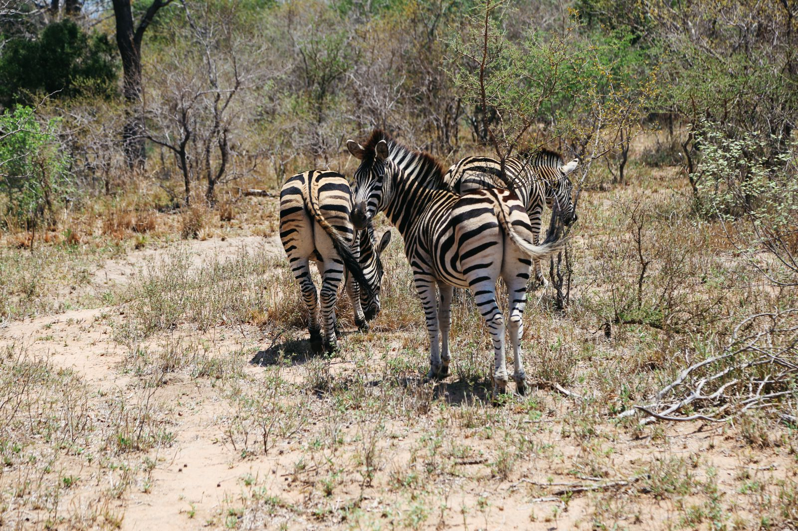 Arriving On Safari In South Africa... (Definitely Not Your Average Airport Transfer!) (7)