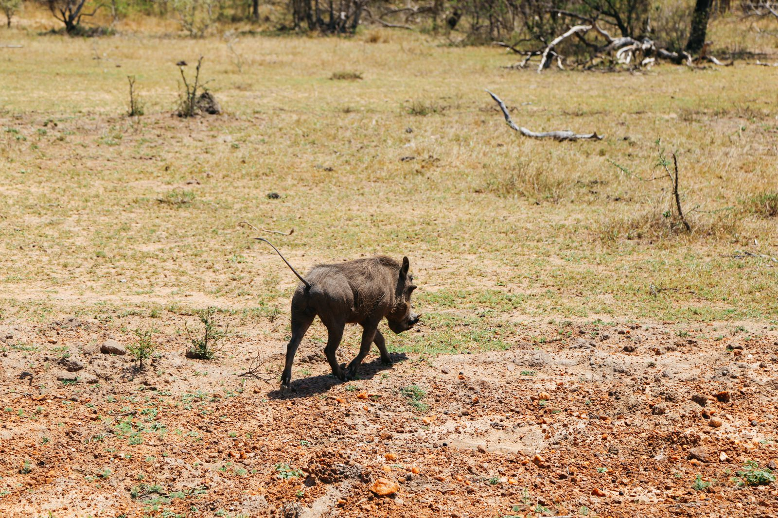 Arriving On Safari In South Africa... (Definitely Not Your Average Airport Transfer!) (13)
