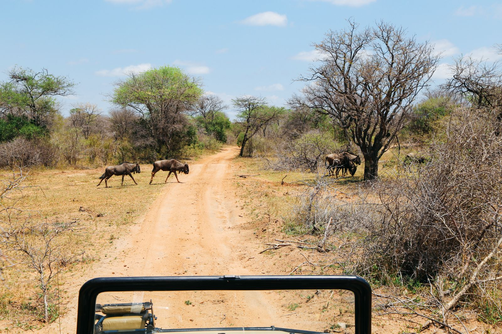 Arriving On Safari In South Africa... (Definitely Not Your Average Airport Transfer!) (14)