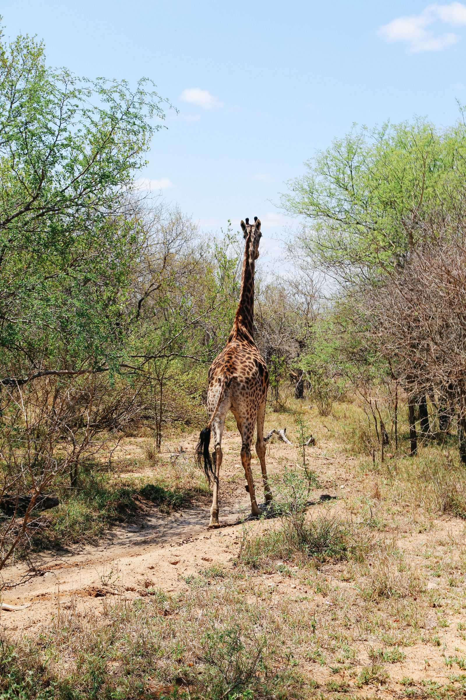 Arriving On Safari In South Africa... (Definitely Not Your Average Airport Transfer!) (18)