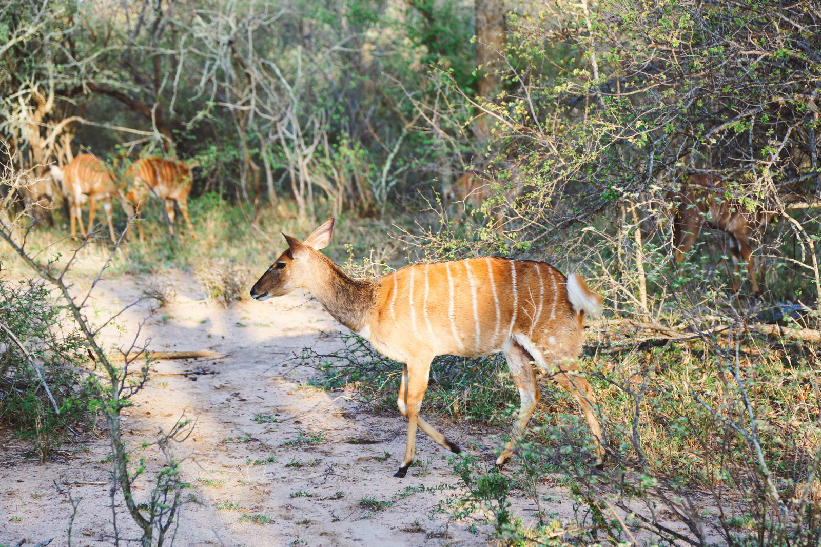 Midnight Lions, Skittish Giraffes And The Deadliest Of The Safari Big 5 In South Africa (1)