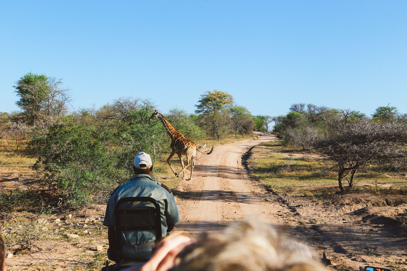 Midnight Lions, Skittish Giraffes And The Deadliest Of The Safari Big 5 In South Africa (39)