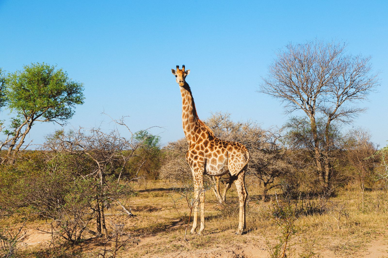 Midnight Lions, Skittish Giraffes And The Deadliest Of The Safari Big 5 In South Africa (40)