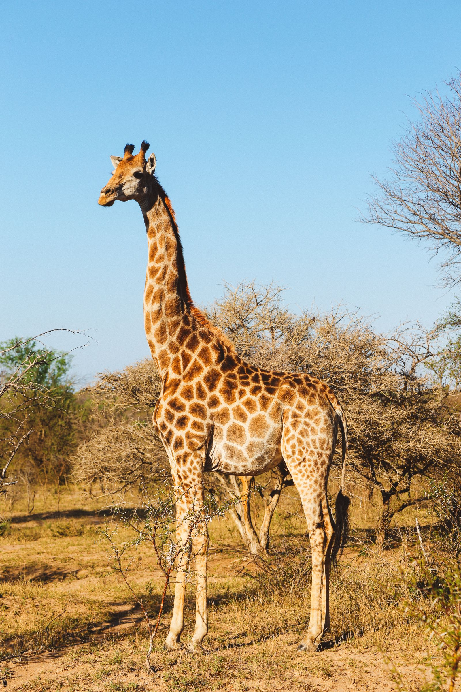 Midnight Lions, Skittish Giraffes And The Deadliest Of The Safari Big 5 In South Africa (41)