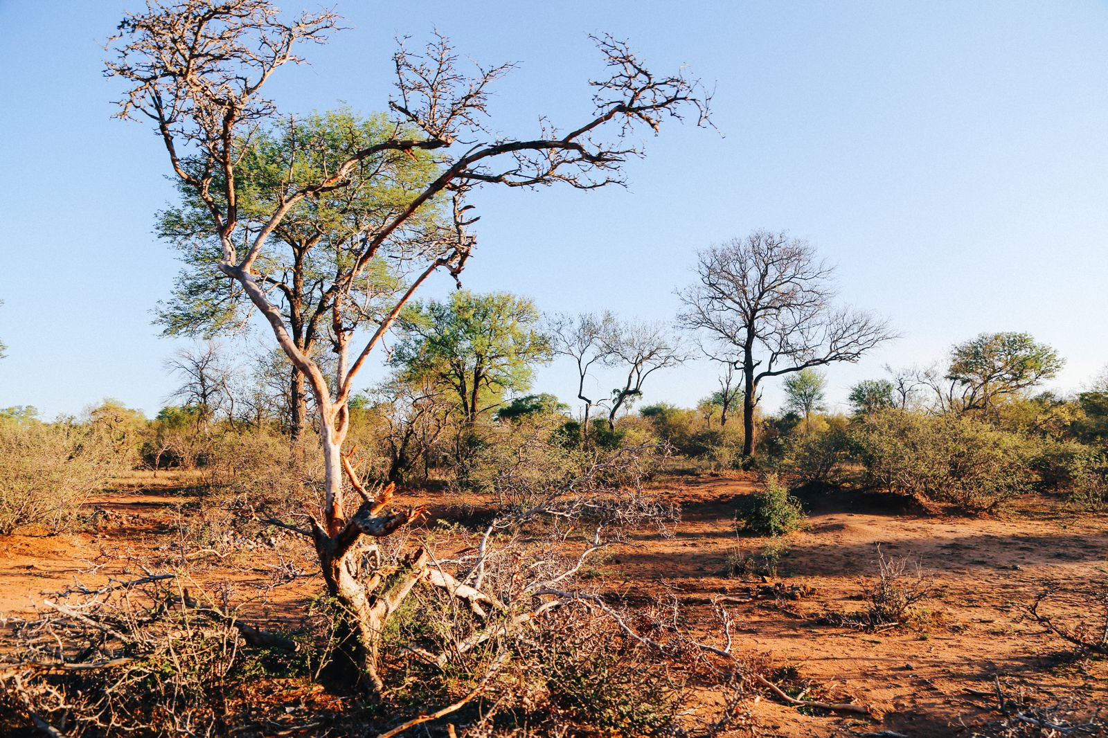 Midnight Lions, Skittish Giraffes And The Deadliest Of The Safari Big 5 In South Africa (49)