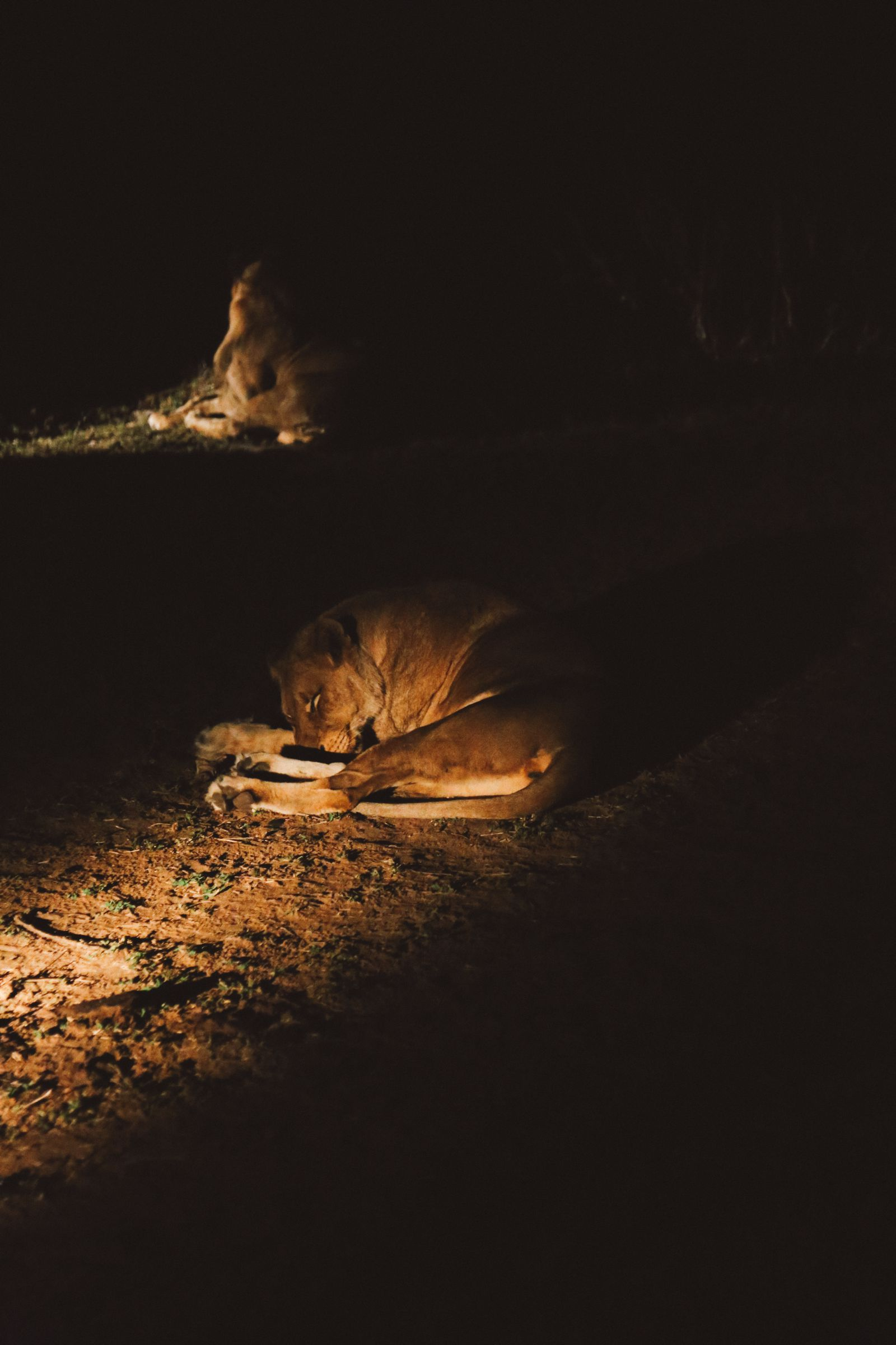 Midnight Lions, Skittish Giraffes And The Deadliest Of The Safari Big 5 In South Africa (61)