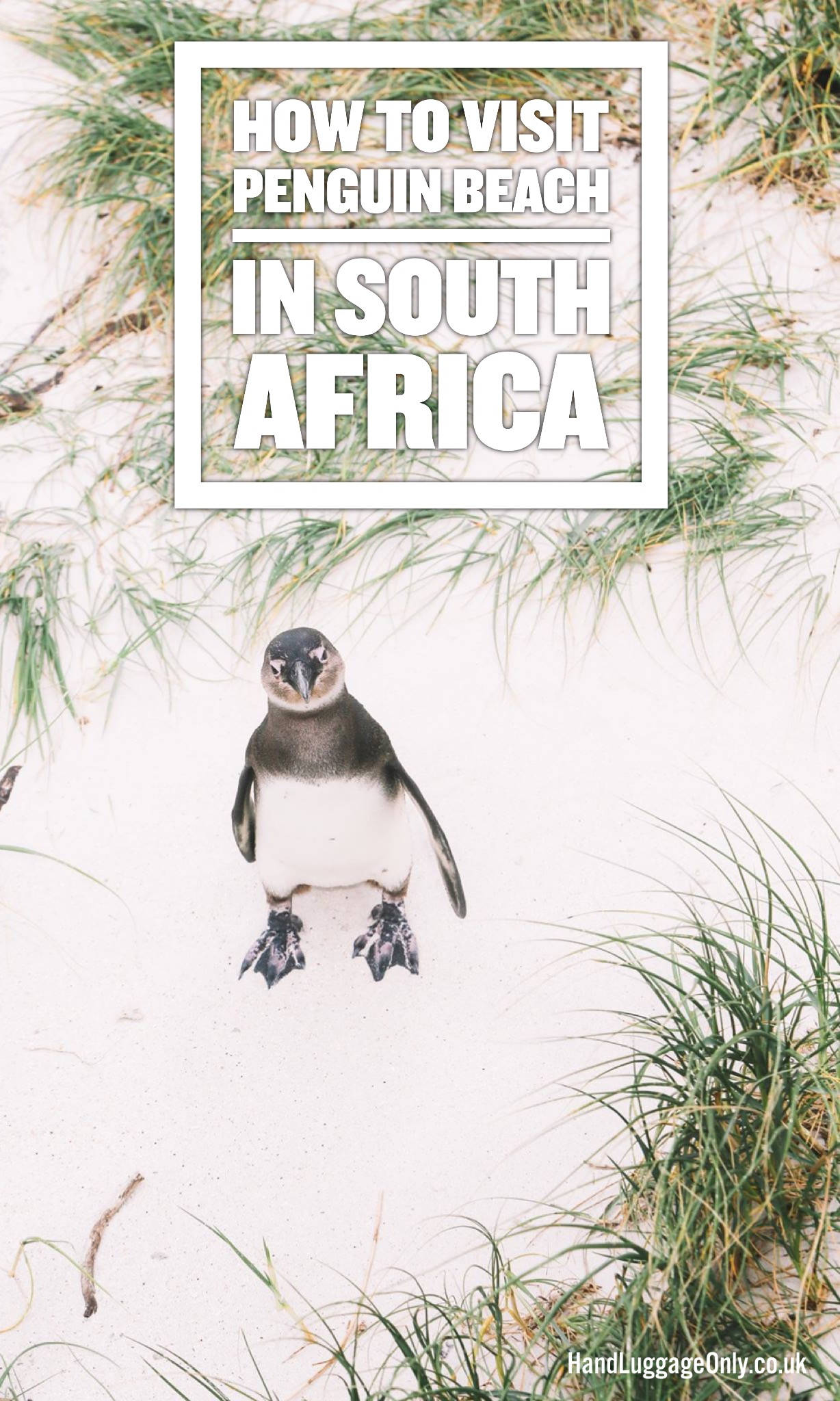 How To Visit Penguin Beach In South Africa