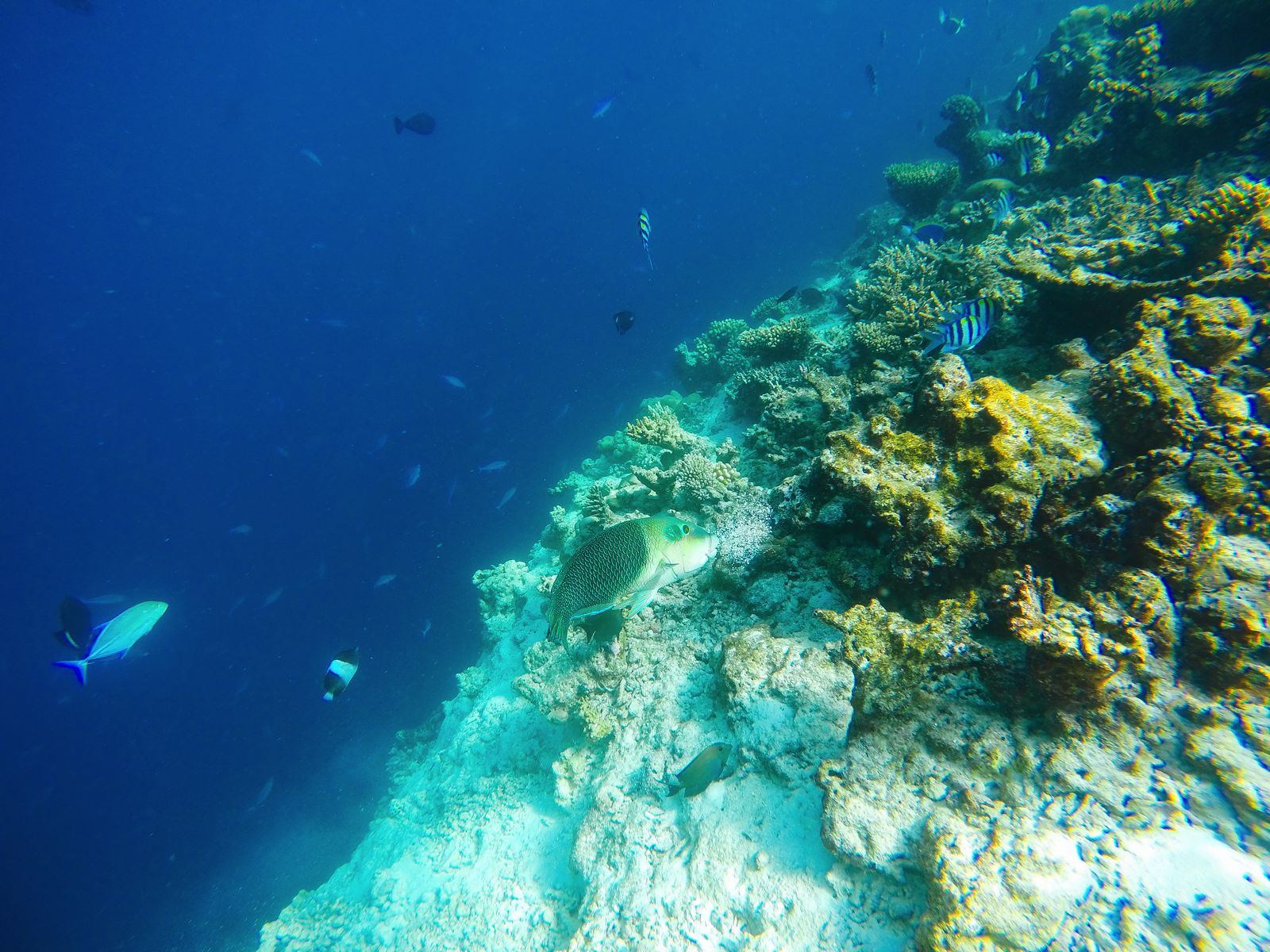 Swimming With Sharks, Turtles, Clownfish And Stingrays In The Maldives (7)