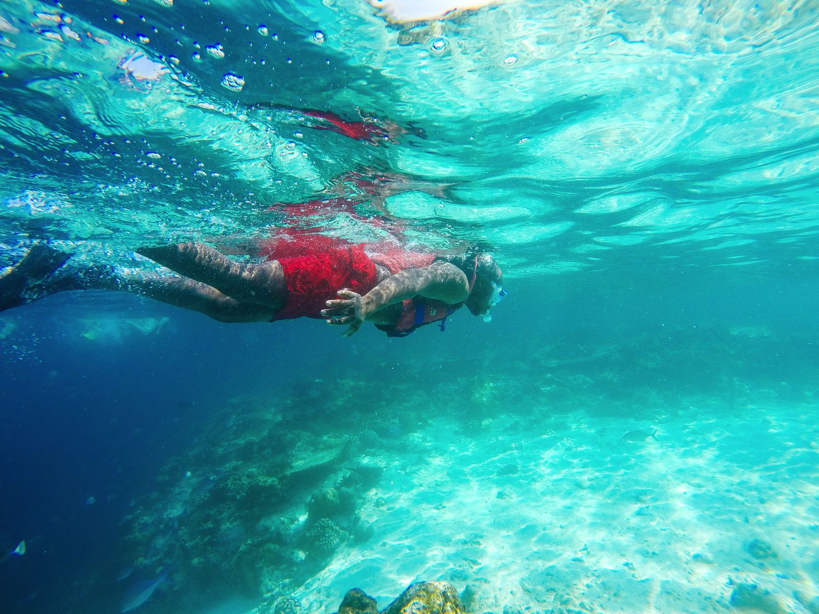Swimming With Sharks, Turtles, Clownfish And Stingrays In The Maldives (9)
