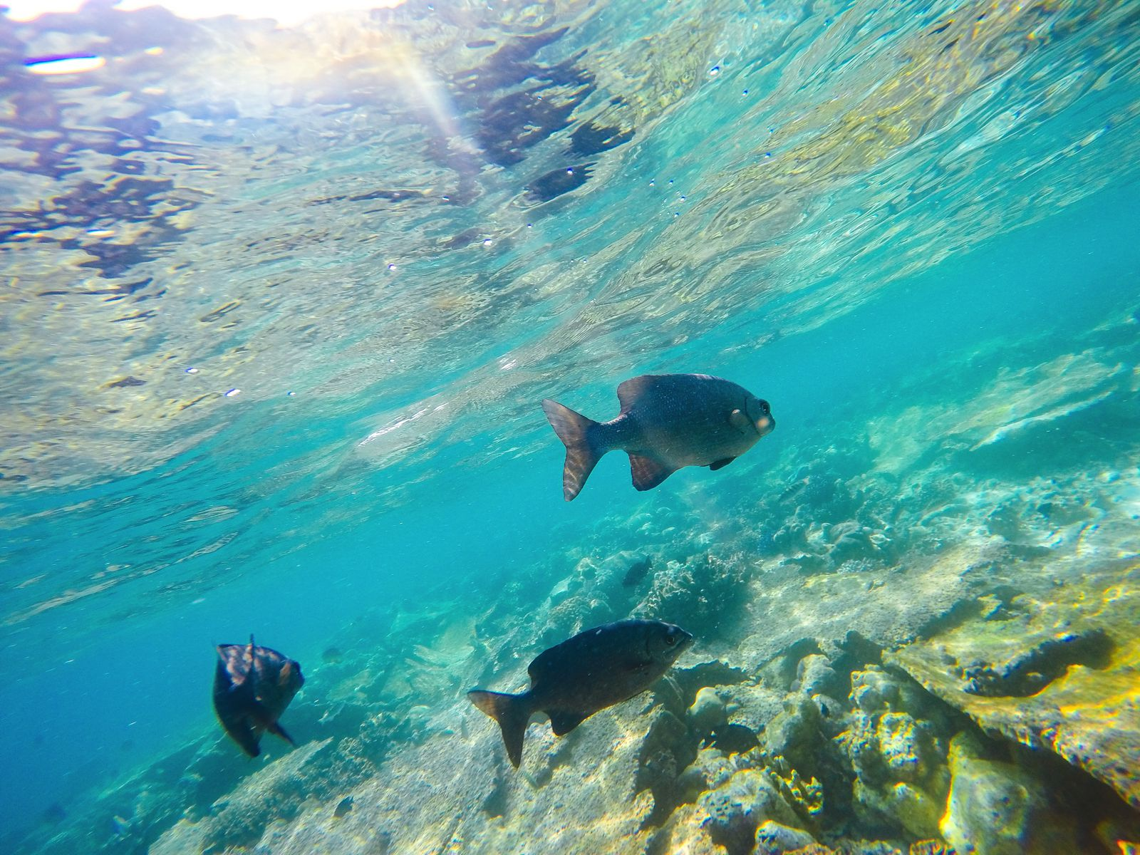 Swimming With Sharks, Turtles, Clownfish And Stingrays In The Maldives (10)