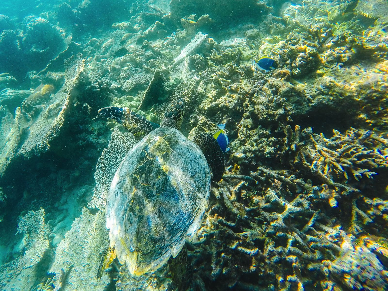 Swimming With Sharks, Turtles, Clownfish And Stingrays In The Maldives (11)