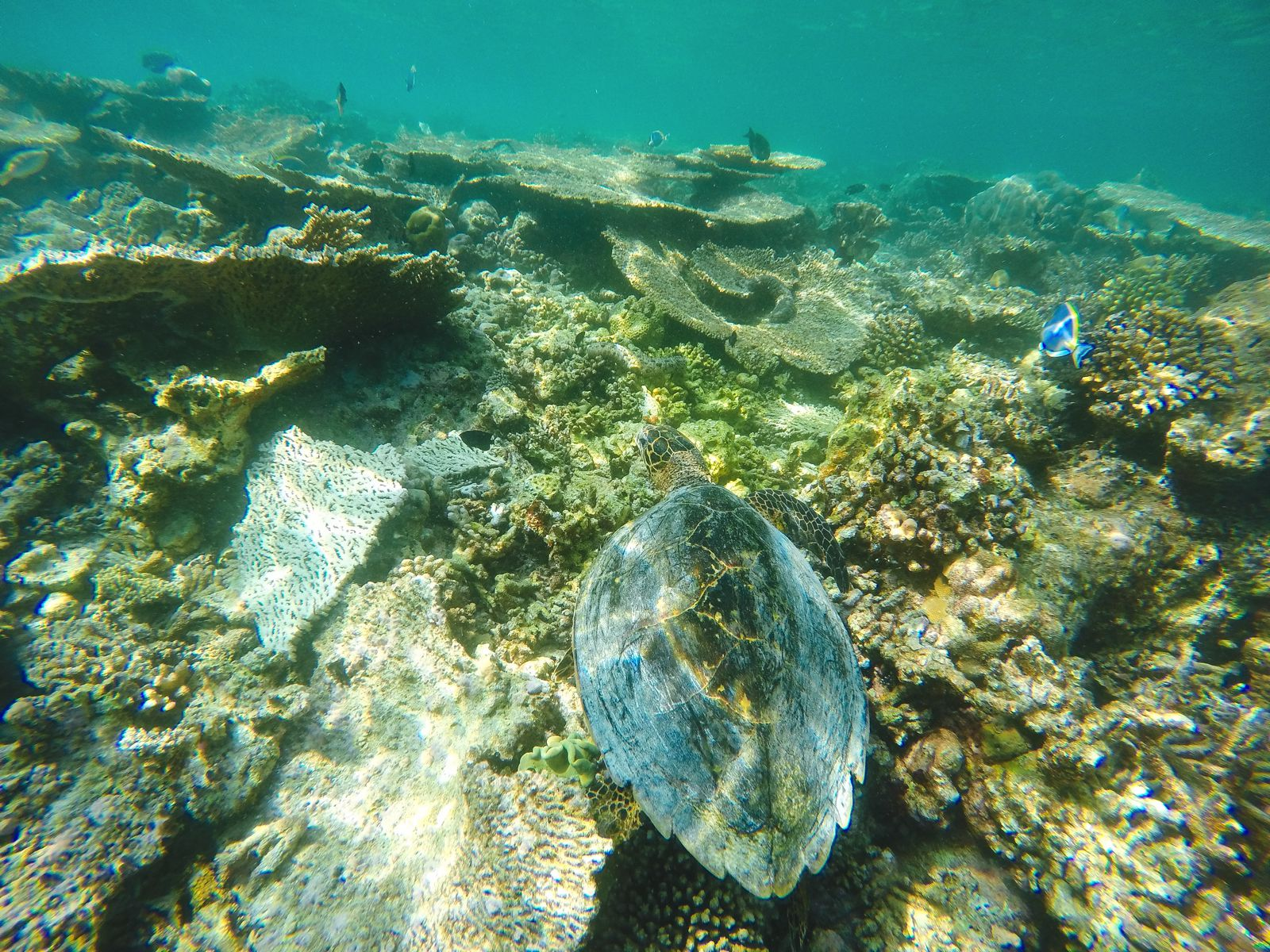 Swimming With Sharks, Turtles, Clownfish And Stingrays In The Maldives (13)
