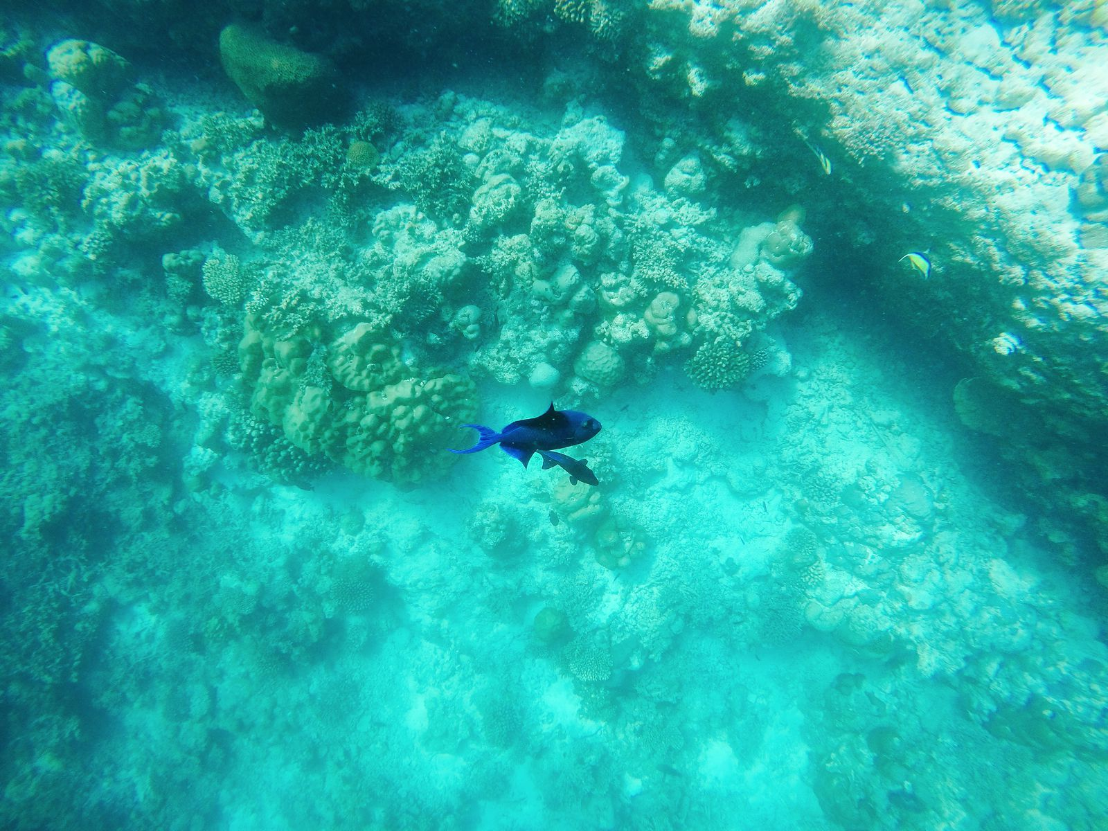 Swimming With Sharks, Turtles, Clownfish And Stingrays In The Maldives (15)