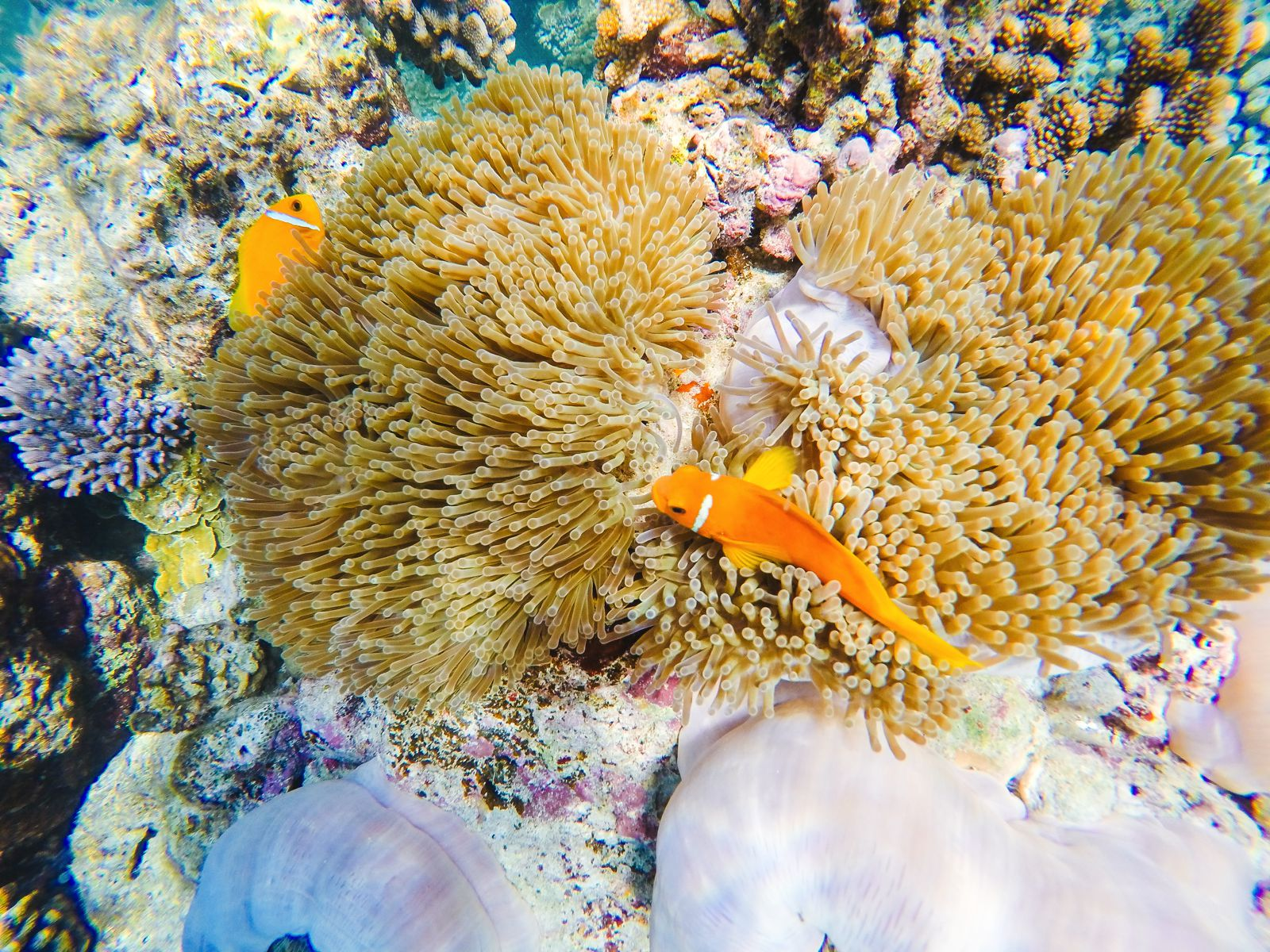 Swimming With Sharks, Turtles, Clownfish And Stingrays In The Maldives (21)