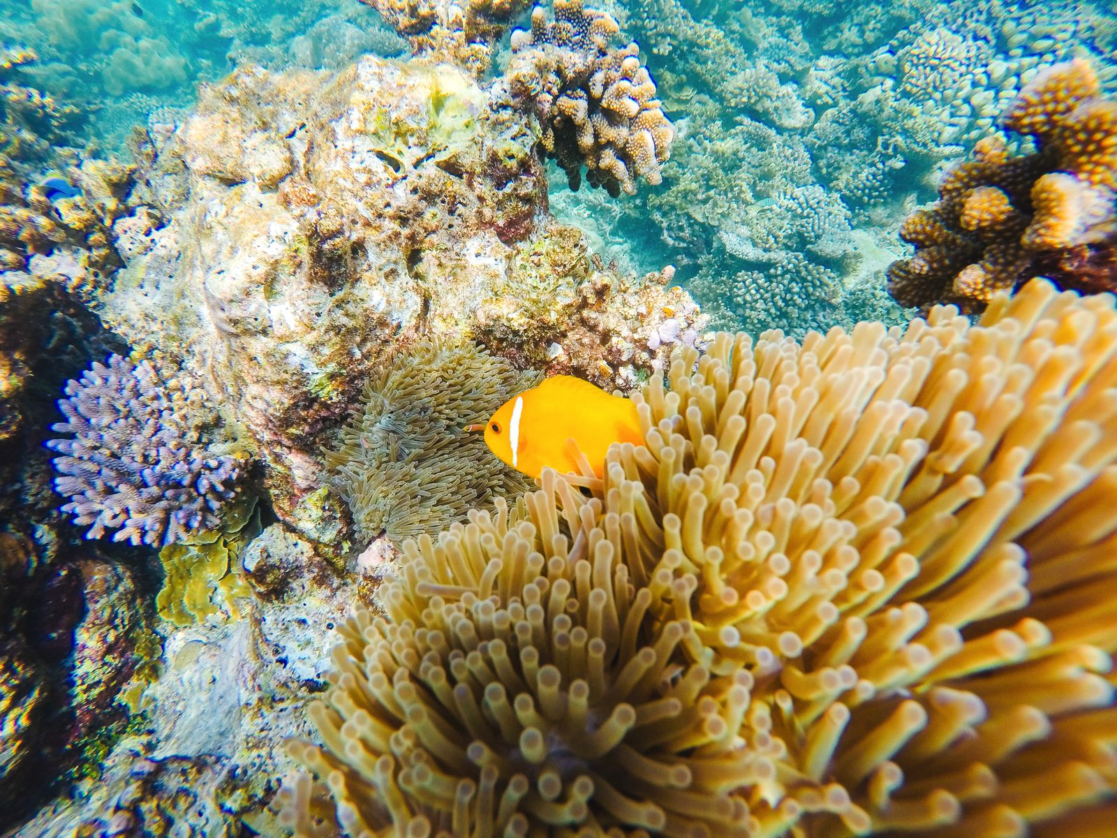 Swimming With Sharks, Turtles, Clownfish And Stingrays In The Maldives (22)