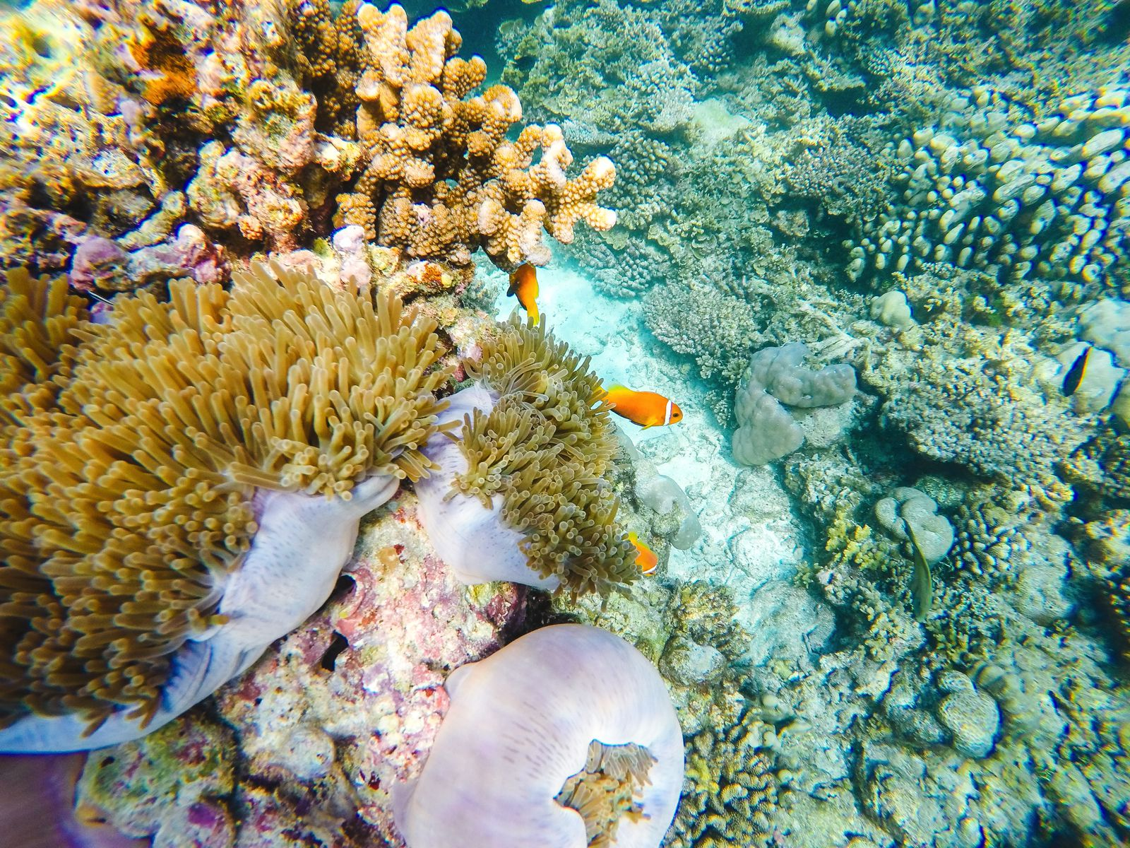 Swimming With Sharks, Turtles, Clownfish And Stingrays In The Maldives (23)