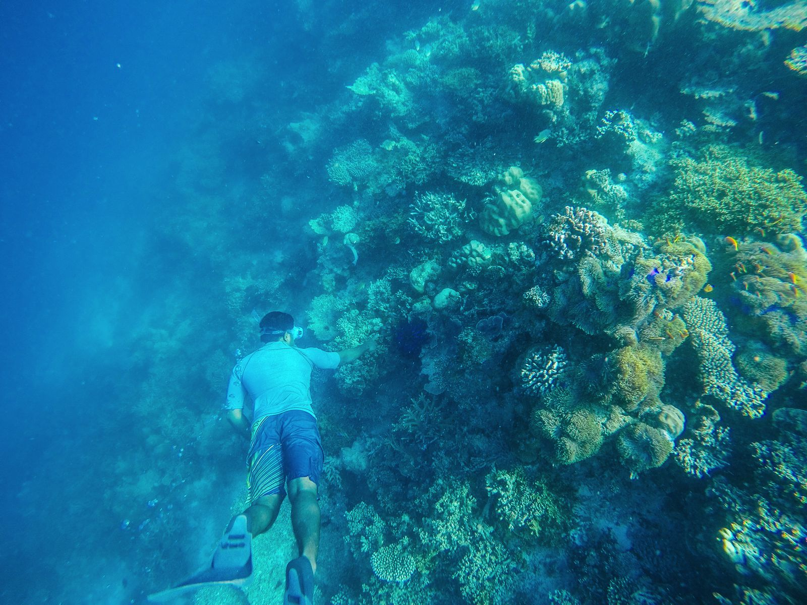 Swimming With Sharks, Turtles, Clownfish And Stingrays In The Maldives (28)