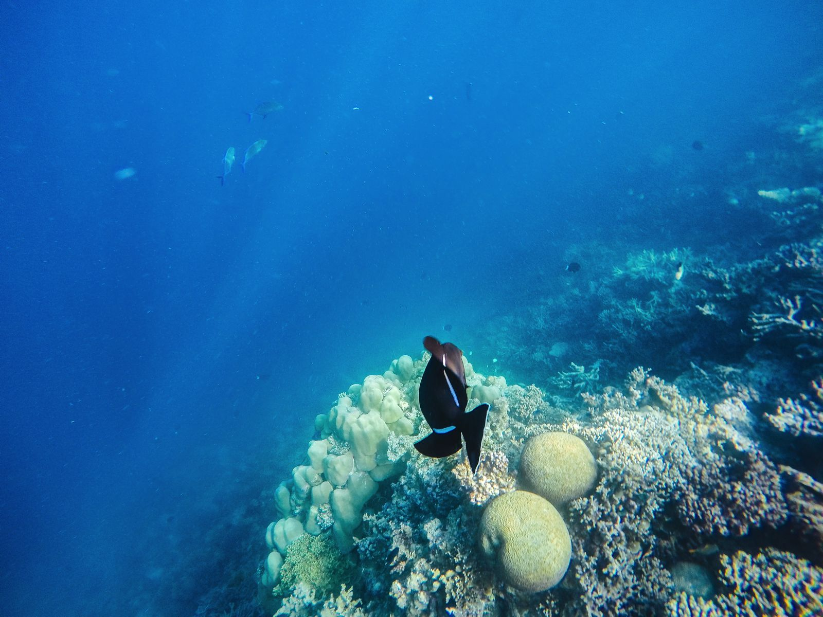 Swimming With Sharks, Turtles, Clownfish And Stingrays In The Maldives (31)