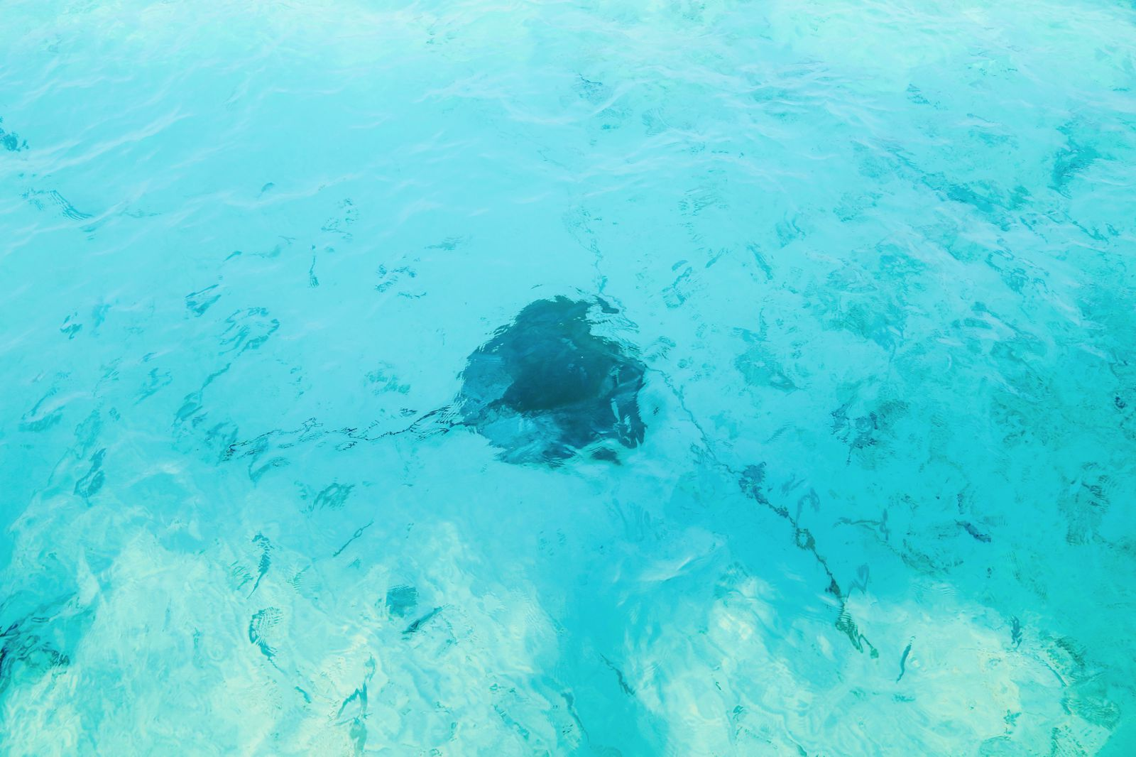 Swimming With Sharks, Turtles, Clownfish And Stingrays In The Maldives (44)