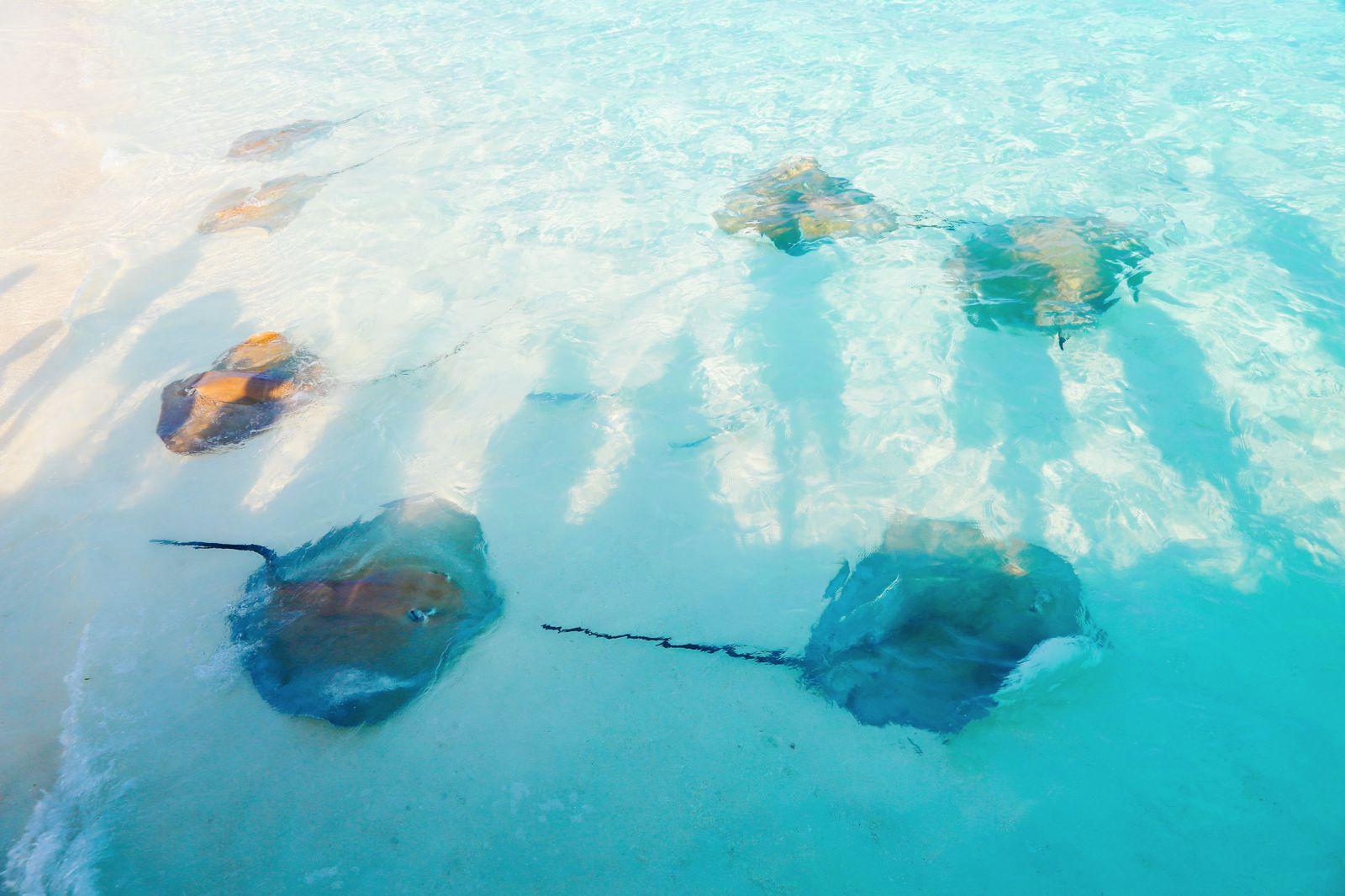 Swimming With Sharks, Turtles, Clownfish And Stingrays In The Maldives (45)