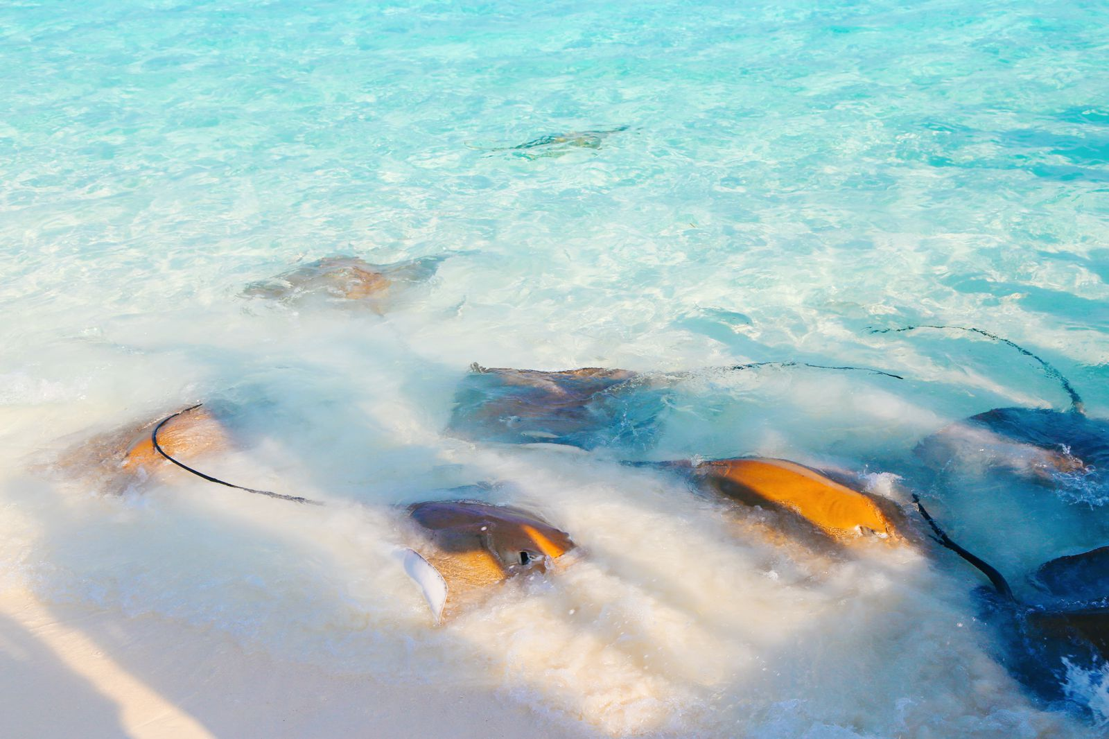 Swimming With Sharks, Turtles, Clownfish And Stingrays In The Maldives (46)