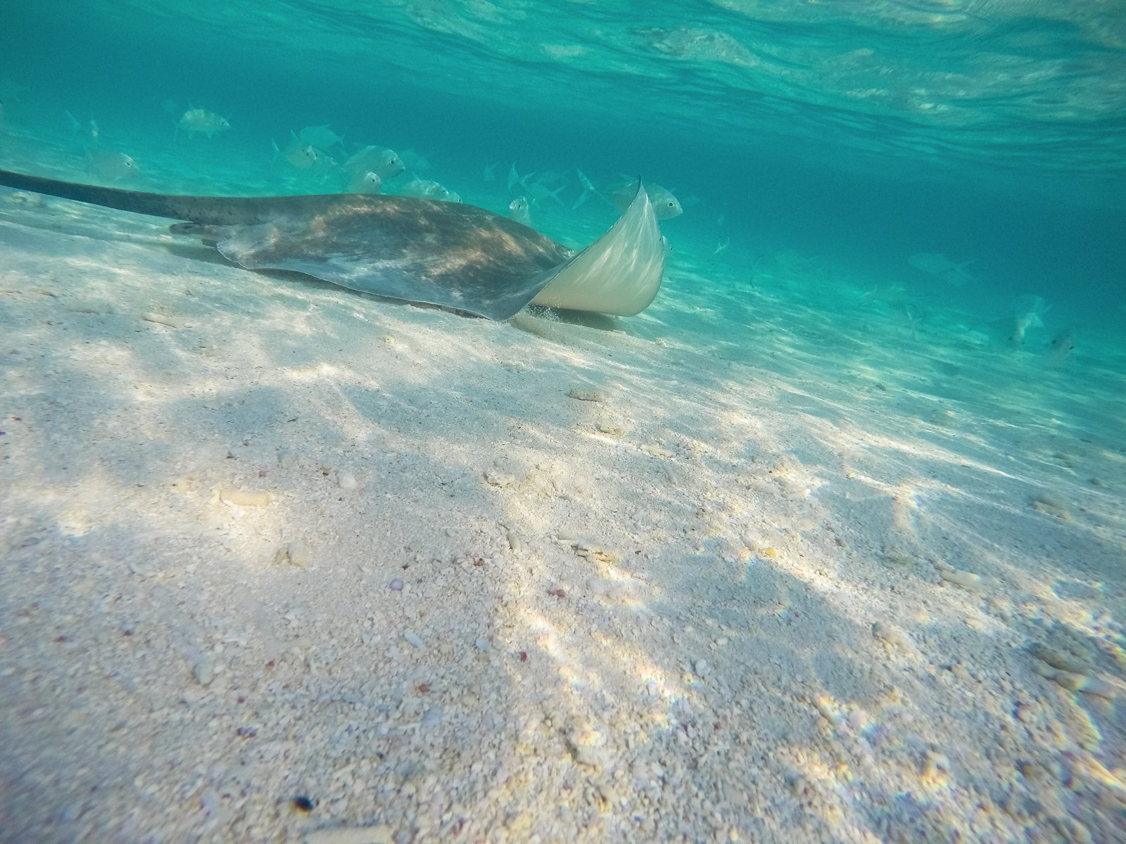 Swimming With Sharks, Turtles, Clownfish And Stingrays In The Maldives (47)