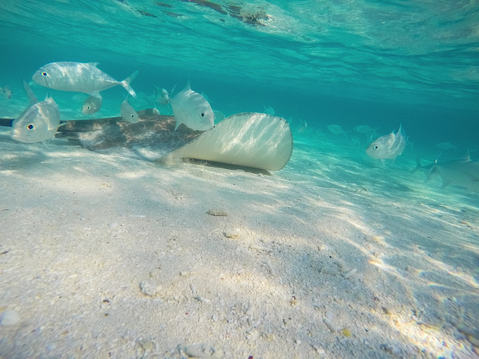 Swimming With Sharks, Turtles, Clownfish And Stingrays In The Maldives (48)