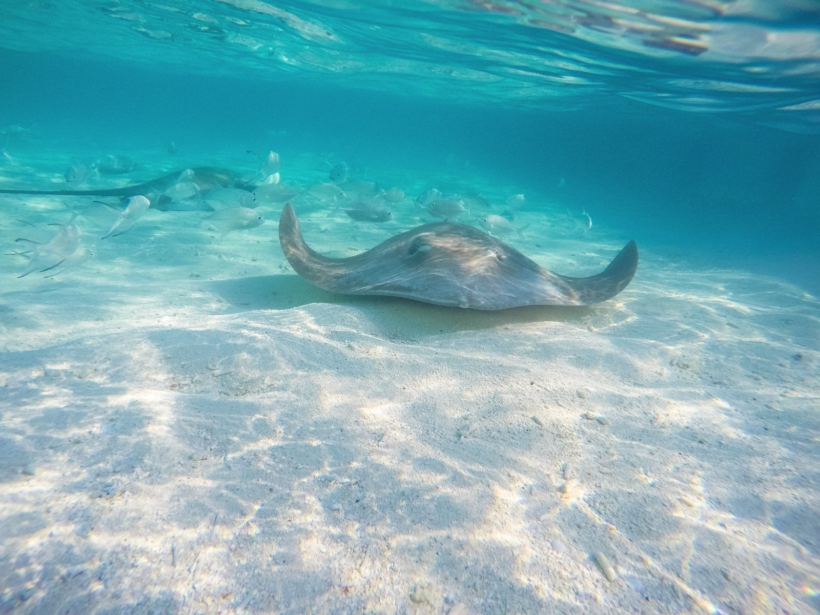 Swimming With Sharks, Turtles, Clownfish And Stingrays In The Maldives (50)