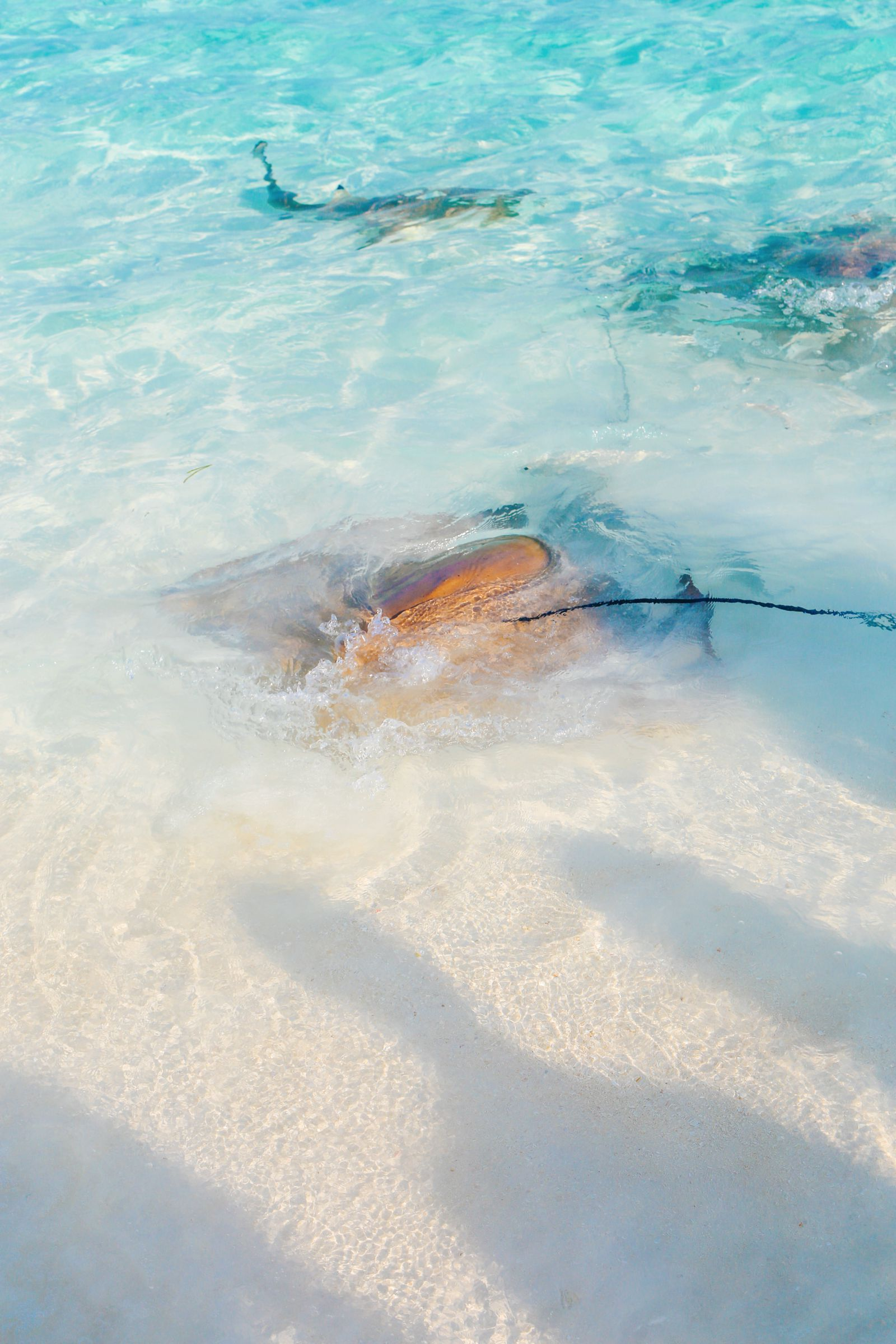 Swimming With Sharks, Turtles, Clownfish And Stingrays In The Maldives (51)