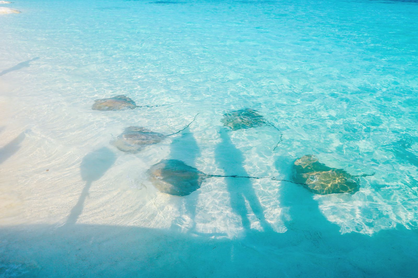 Swimming With Sharks, Turtles, Clownfish And Stingrays In The Maldives (52)