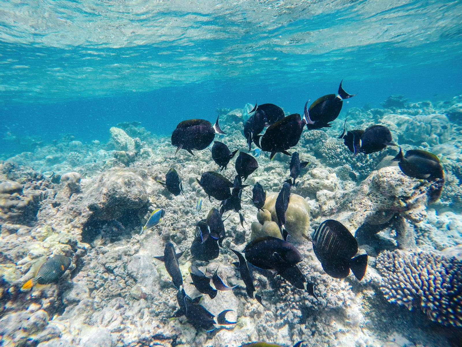 Reef Explorers In The Maldives (10)