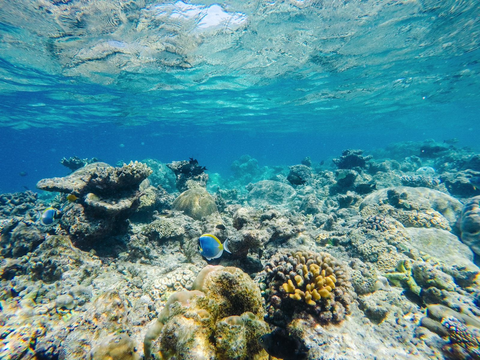 Reef Explorers In The Maldives (11)