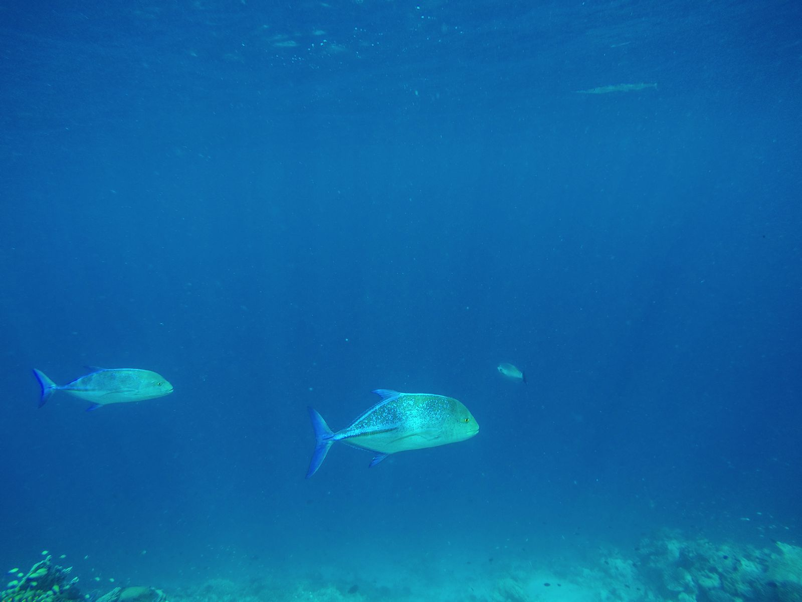 Reef Explorers In The Maldives (16)