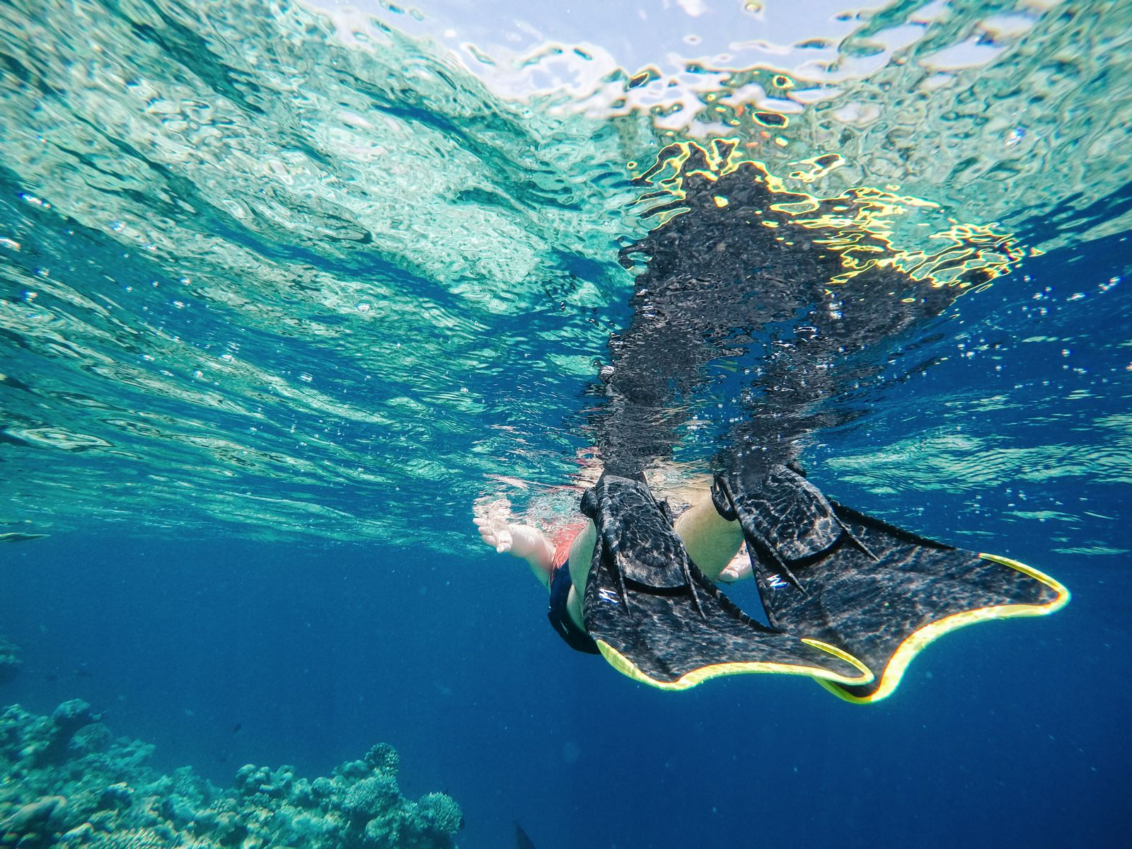 Reef Explorers In The Maldives (19)