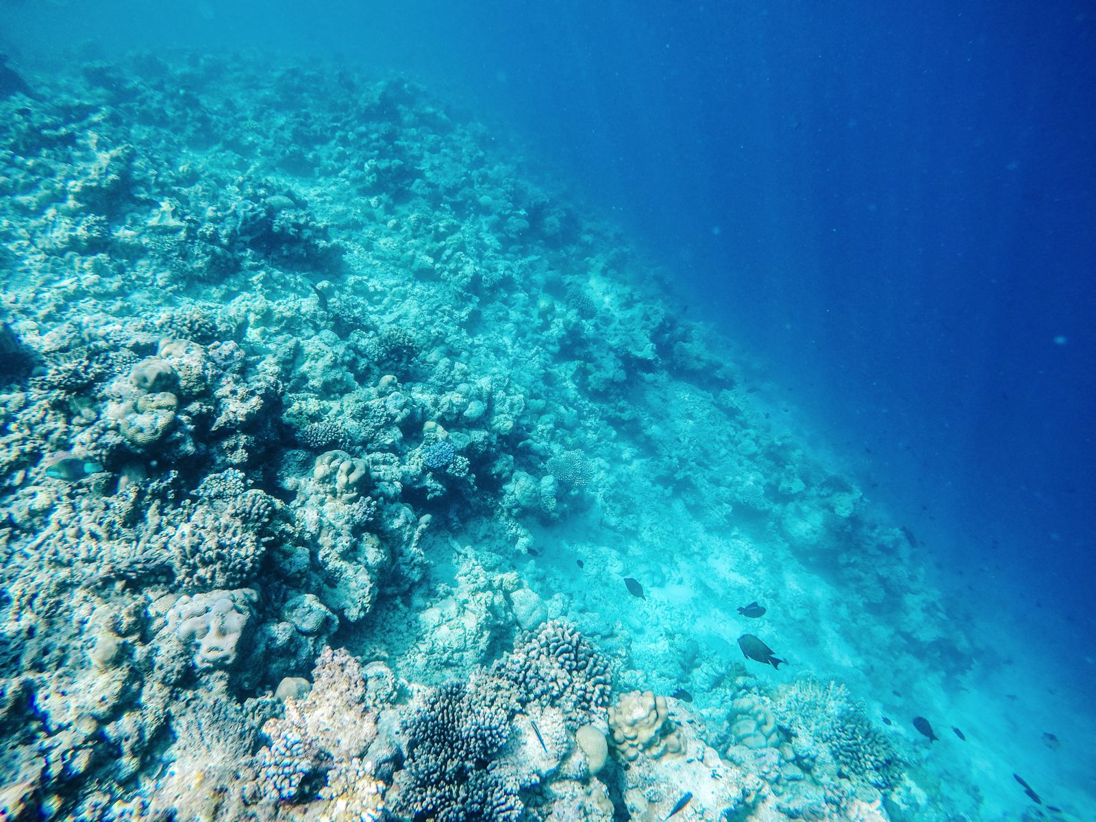 Reef Explorers In The Maldives (21)