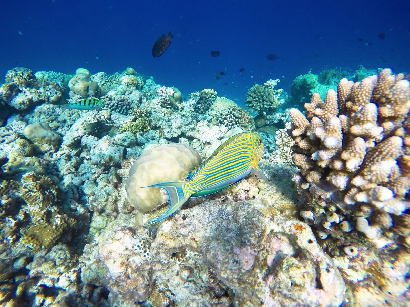 Reef Explorers In The Maldives (23)