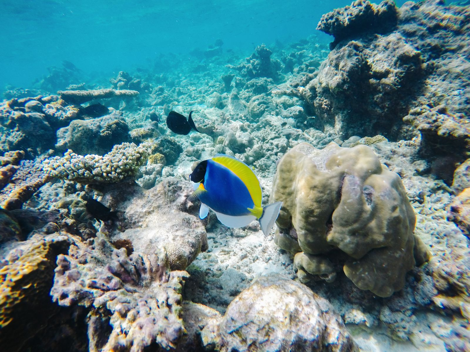 Reef Explorers In The Maldives (26)
