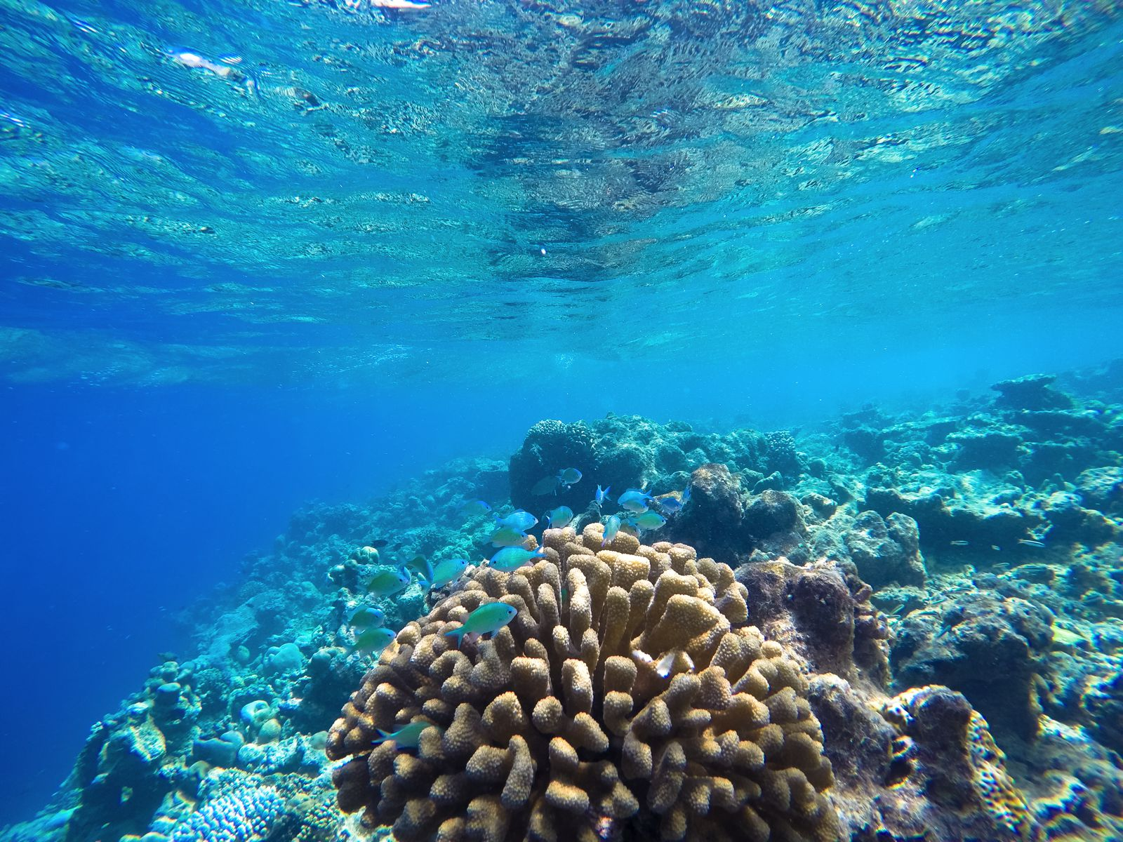 Reef Explorers In The Maldives (27)
