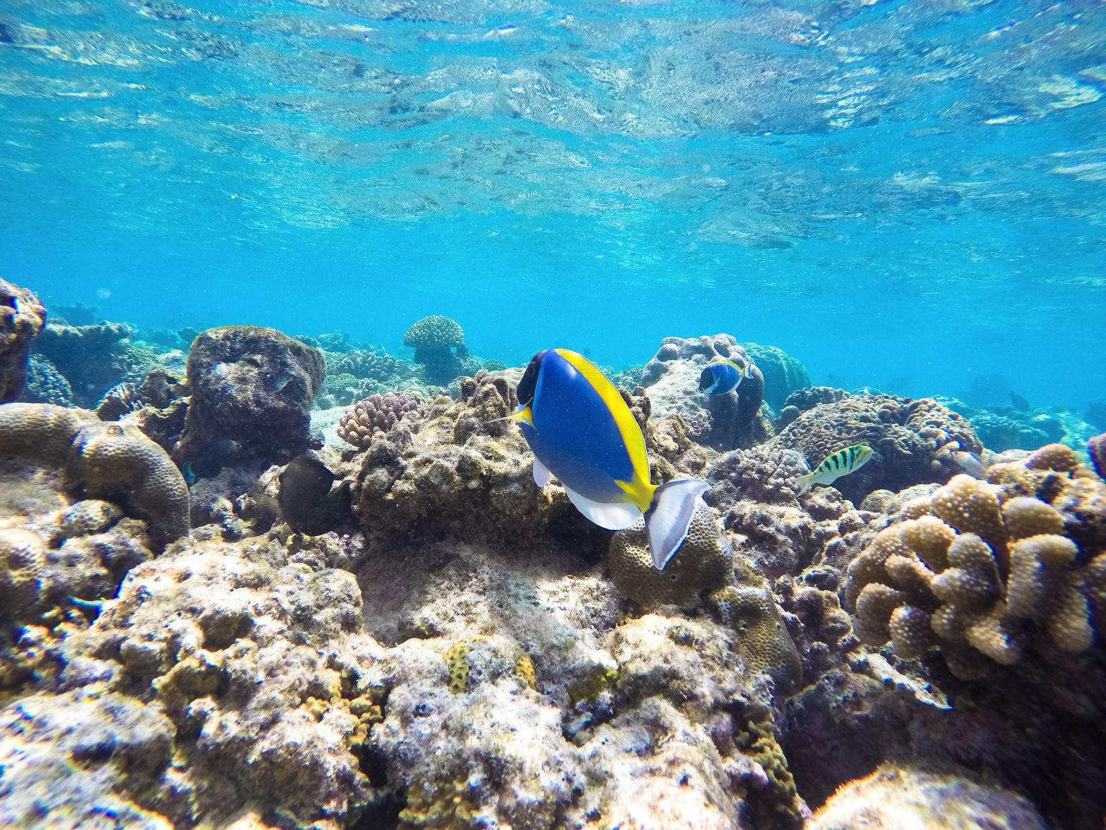 Reef Explorers In The Maldives (28)