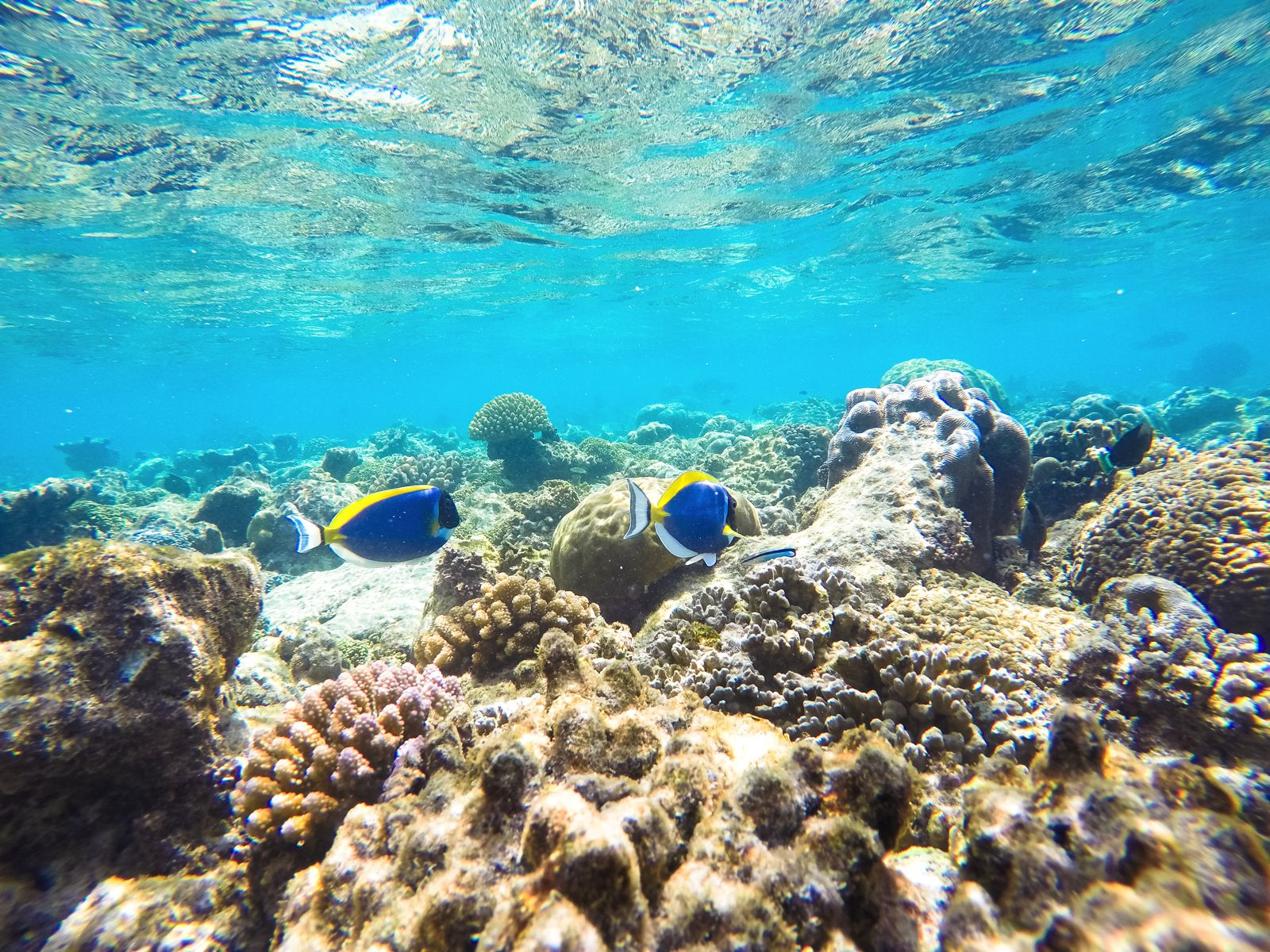 Reef Explorers In The Maldives (29)