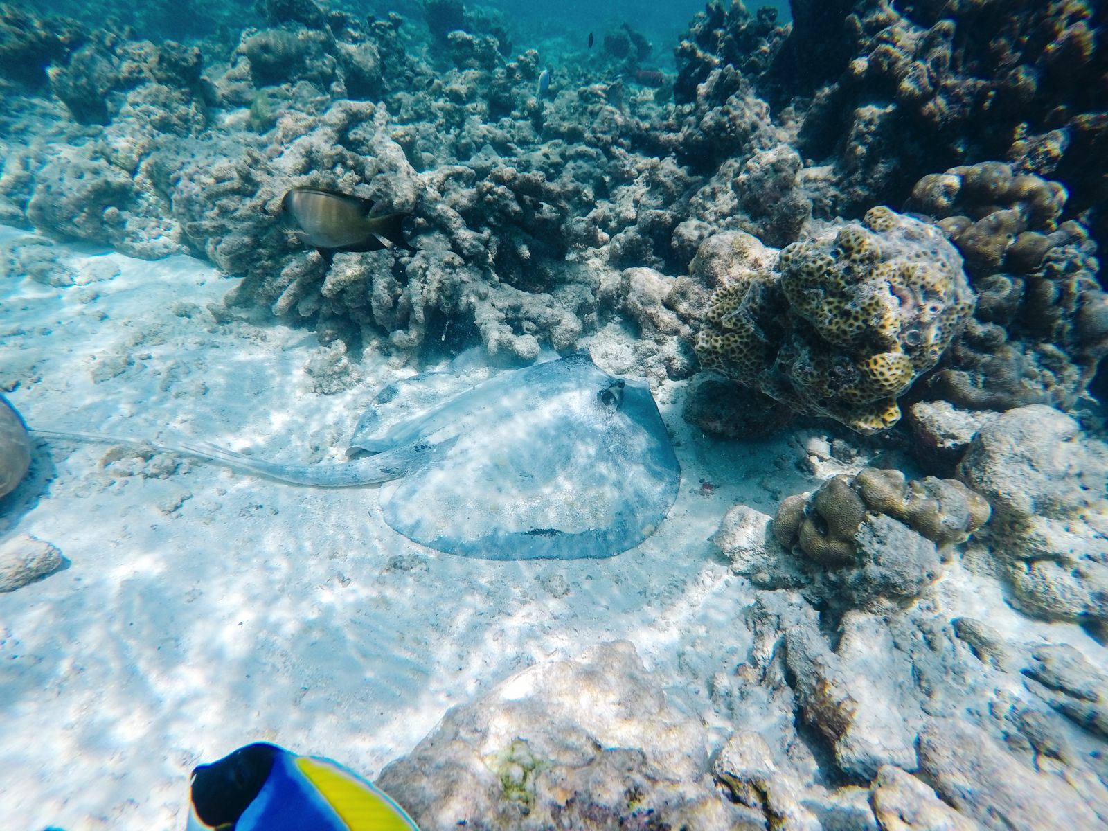 Reef Explorers In The Maldives (31)