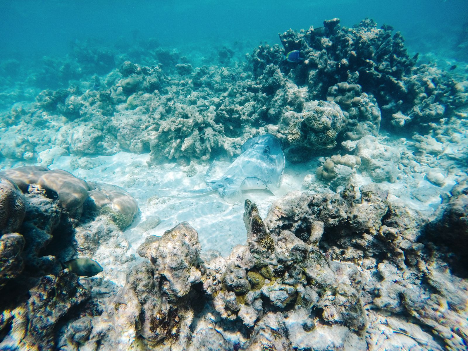 Reef Explorers In The Maldives (32)
