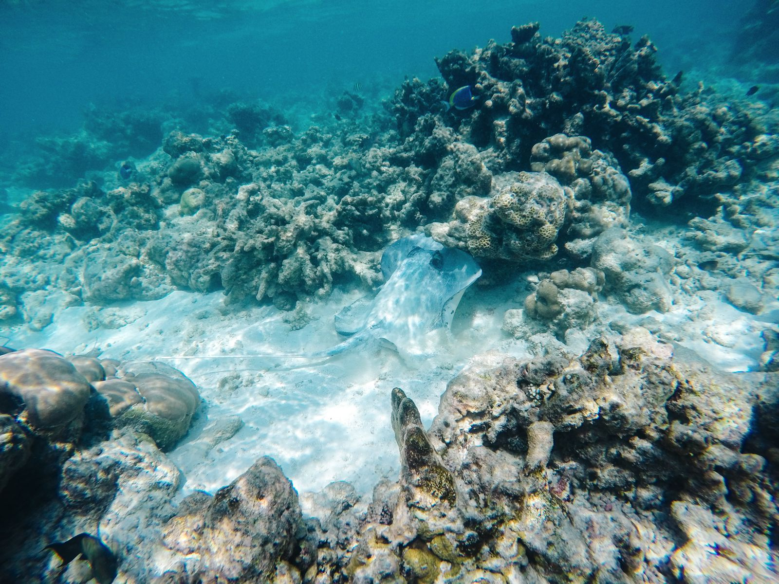 Reef Explorers In The Maldives (33)