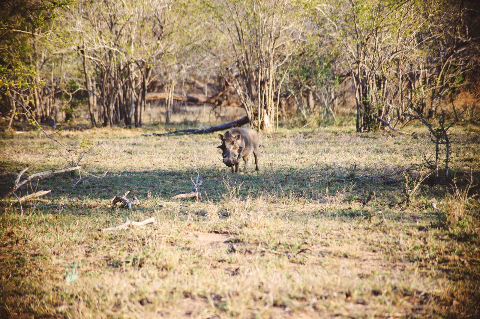 The First Safari... In South Africa (35)