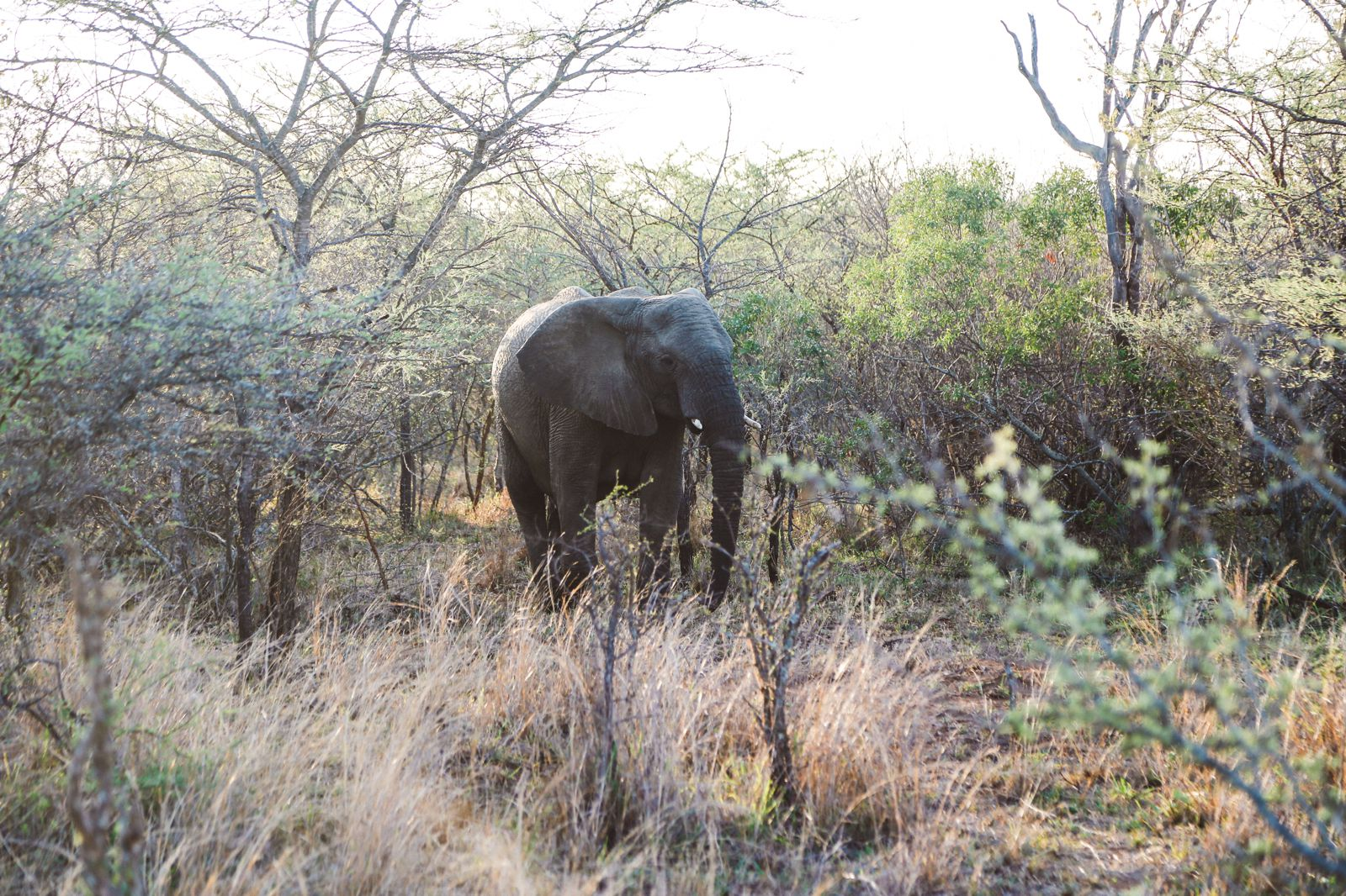 The First Safari... In South Africa (42)