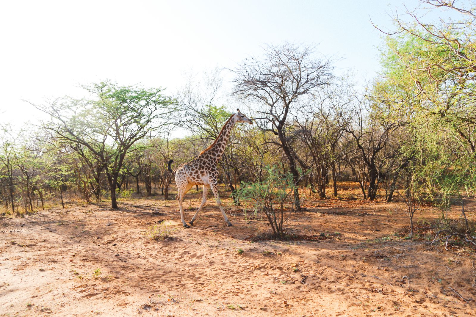 Sunrise Till Sunset - A 24 Hour South African Safari Diary (2)