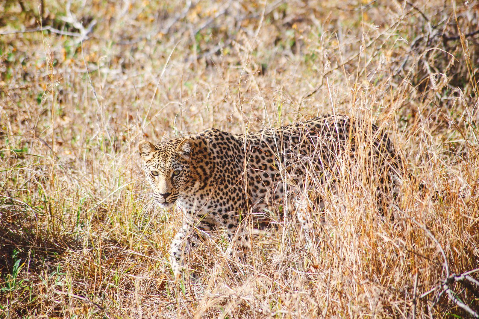 Sunrise Till Sunset - A 24 Hour South African Safari Diary (13)