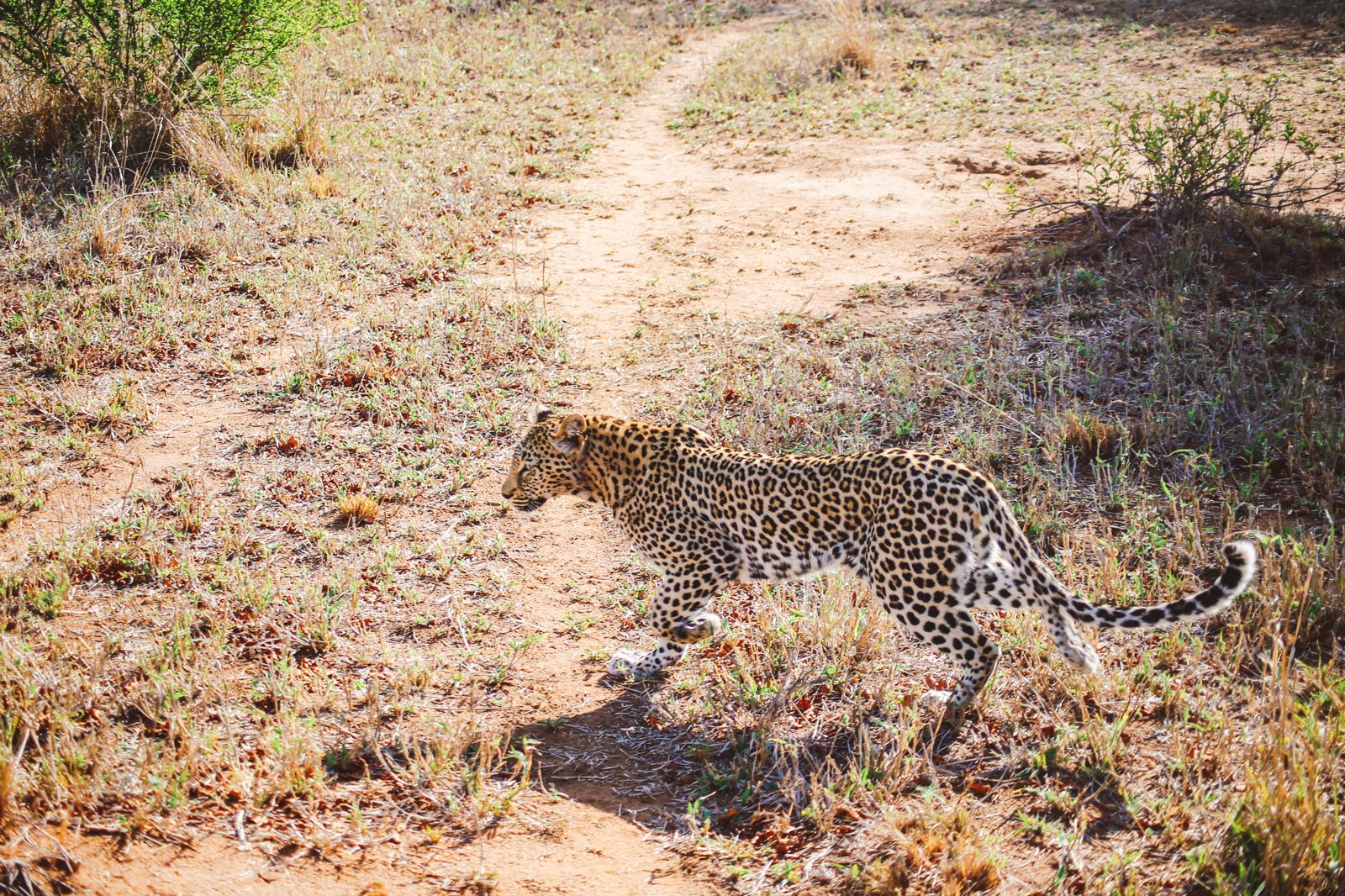 Sunrise Till Sunset - A 24 Hour South African Safari Diary (14)