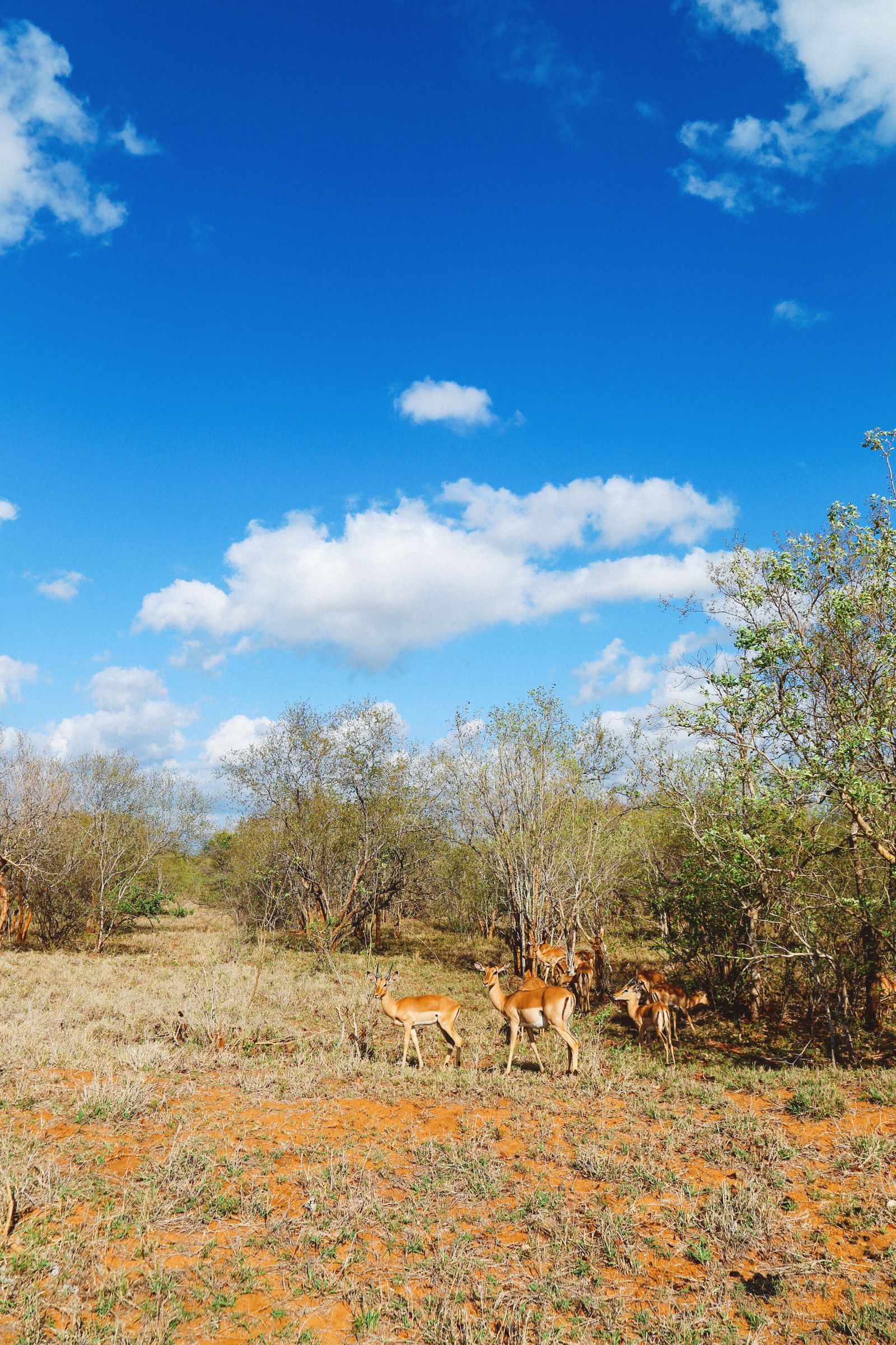 Sunrise Till Sunset - A 24 Hour South African Safari Diary (16)