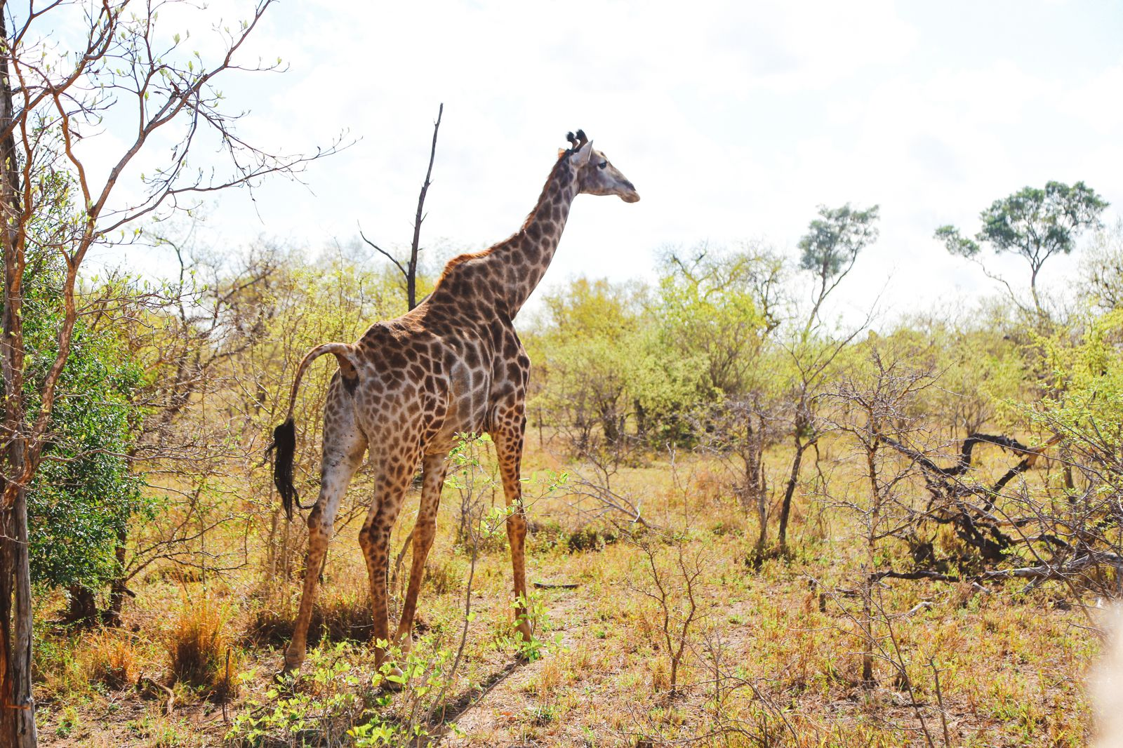Sunrise Till Sunset - A 24 Hour South African Safari Diary (19)